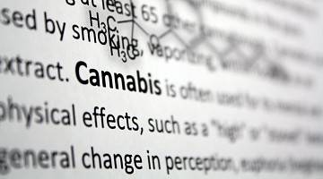 Word cannabis highlighted in a journal article