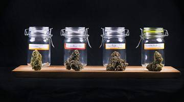 Four jars of marijuana of different strains