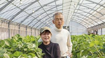 Two senior workers in a greenhouse